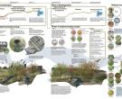 Wild Waters: Creating Habitat in Urban Waterways, Anne Denney, student, Kansas State University, Manhattan, KS (T126)